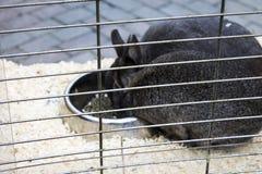 Kaninchen in einem Käfig Lizenzfreie Stockfotografie