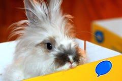 Kaninchen in einem Kasten Lizenzfreie Stockfotografie