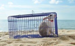 Kaninchen in einem Metallrahmen lizenzfreie stockfotos