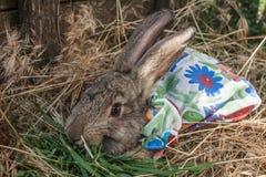 Kaninchen in einem Nahaufnahmekleid Stockfotografie