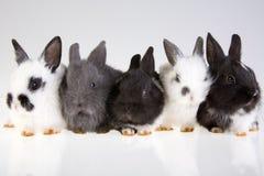 Kaninchen fünf lizenzfreies stockfoto