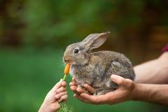 Kaninchen Fütterungstier Lizenzfreie Stockfotografie