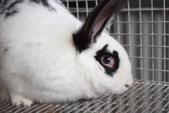 Kaninchen furchtsam Lizenzfreie Stockfotos