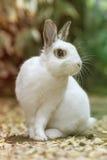 Kaninchen im Garten Stockfoto