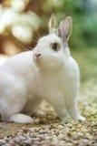 Kaninchen im Garten Lizenzfreie Stockfotografie