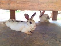 Kaninchen im Garten Lizenzfreies Stockbild