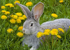 Kaninchen im Gras Lizenzfreie Stockbilder