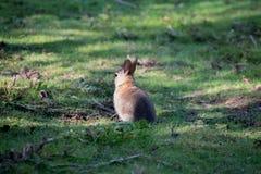 Kaninchen im Holz lizenzfreie stockfotografie