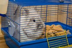Kaninchen im Käfig Lizenzfreie Stockbilder