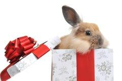 Kaninchen im Kasten Stockfoto