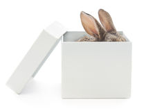 Kaninchen im Kasten Lizenzfreie Stockfotos