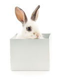 Kaninchen im Kasten Stockfotos