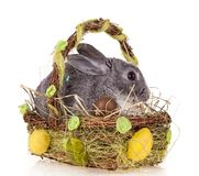 Kaninchen im Korb auf weißem Hintergrund stockfotos