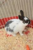 Kaninchen im Rahmen Lizenzfreies Stockbild