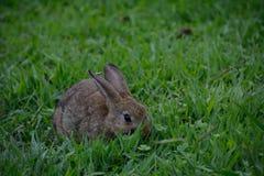 Kaninchen-Jahreszeit Lizenzfreies Stockfoto