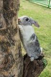 Kaninchen klettern Stockbild