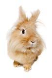Kaninchen lokalisiert auf weißem Hintergrund Stockbild