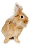 Kaninchen lokalisiert auf weißem Hintergrund Lizenzfreies Stockfoto