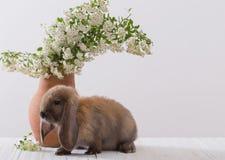 Kaninchen mit Blumen lizenzfreie stockbilder