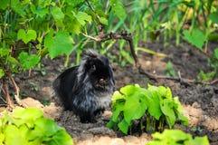 Kaninchen mit der Zunge heraus Lizenzfreie Stockbilder