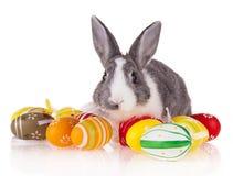 Kaninchen mit Eiern auf weißem Hintergrund lizenzfreie stockfotos