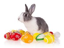 Kaninchen mit Eiern auf weißem Hintergrund Lizenzfreie Stockfotografie