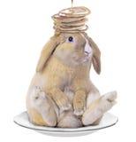 Kaninchen mit einem Pfannkuchen auf seinem Kopf Stockfotografie