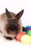 Kaninchen mit farbigen Eiern Lizenzfreies Stockfoto