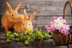 Kaninchen mit Frühlingsblumen Stockbild