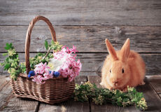 Kaninchen mit Frühlingsblumen Stockfoto