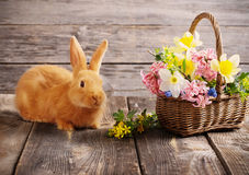 Kaninchen mit Frühlingsblumen Stockfotos