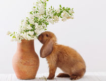Kaninchen mit Frühlingsblumen Lizenzfreie Stockbilder