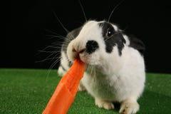Kaninchen mit Karotte Lizenzfreies Stockbild