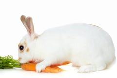 Kaninchen mit Karotten Lizenzfreie Stockfotos