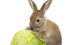 Kaninchen mit Karotten Stockfotos