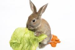Kaninchen mit Karotten und Kohl Stockbilder