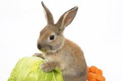 Kaninchen mit Karotten und Kohl Stockfoto