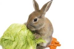 Kaninchen mit Karotten und Kohl Lizenzfreies Stockfoto