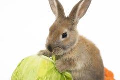 Kaninchen mit Karotten und Kohl Lizenzfreie Stockfotos