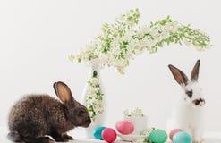 Kaninchen mit Ostereiern Lizenzfreies Stockbild