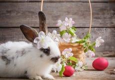 Kaninchen mit Ostereiern Lizenzfreie Stockfotos
