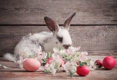Kaninchen mit Ostereiern Stockfoto