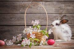Kaninchen mit Ostereiern Lizenzfreie Stockbilder