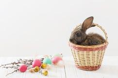 Kaninchen mit Ostereiern Stockbild