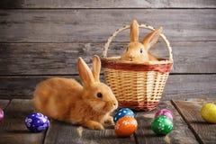 Kaninchen mit Ostereiern auf hölzernem Hintergrund Stockfotos