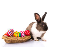 Kaninchen mit Ostereiern lokalisiert Stockbilder