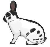 Kaninchen, Tier Stockfotografie
