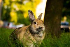 Kaninchen Tishka stockbilder