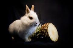 Kaninchen und Ananas Lizenzfreie Stockbilder