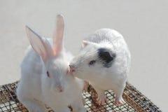 Kaninchen und Hamster Stockbild